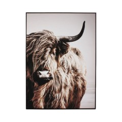 CANVAS PHOTO PICTURE HIGHLAND COW - PHOTO PRINTS